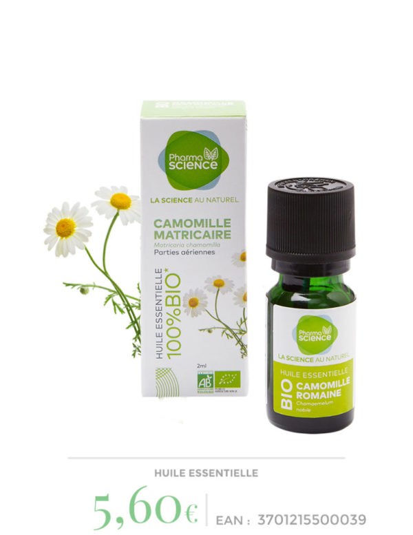 camomille-matricaire